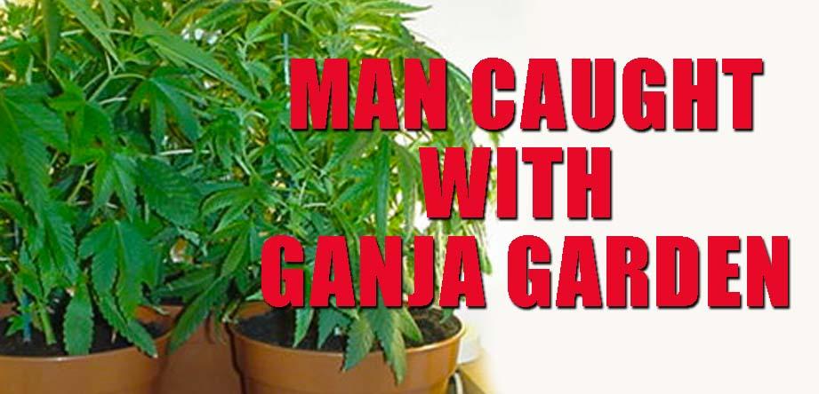 Ganja Garden