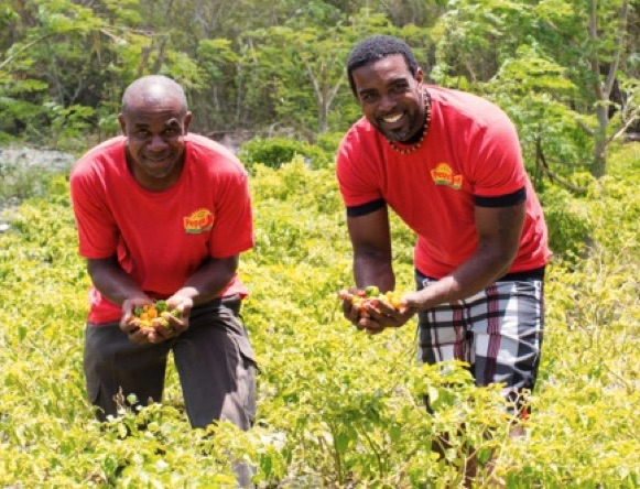 North Caicos farmers