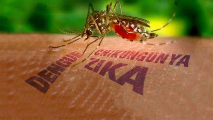 Zika Image