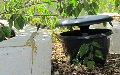Environmental Health Dept Now Utilizing In2Care Traps to fight of mosquito population