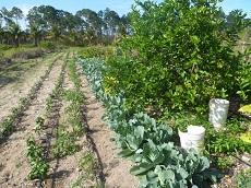 Nassau farm