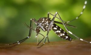 no zika