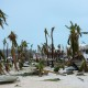 A photo taken on September 6, 2017 shows broken palm trees on the beach of the Hotel Mercure in Marigot, near the Bay of Nettle, on the French Collectivity of Saint Martin, after the passage of Hurricane Irma. France, the Netherlands and Britain on September 7 sent water, emergency rations and rescue teams to their stricken territories in the Caribbean hit by Hurricane Irma, which has killed at least 10 people. The worst-affected island so far is Saint Martin, which is divided between the Netherlands and France, where eight of the 10 confirmed deaths took place.  / AFP PHOTO / Lionel CHAMOISEAULIONEL CHAMOISEAU/AFP/Getty Images