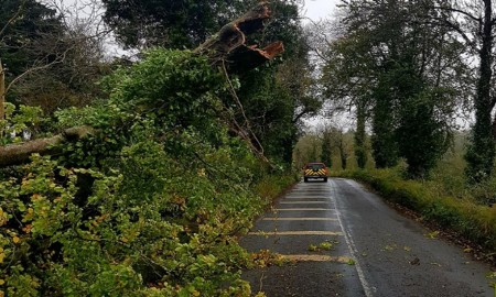 ireland tree down