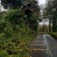 ireland tree down